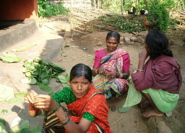 Indian tribal women collect sal leaves from the forest to make and sell plates in Angul, Odisha. TRF/Manipadma Jena