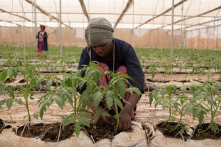 Malian architect fights climate change with digital greenhouse