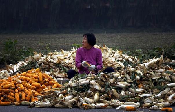 A woman sits on a pile of corn as she removes the husks on a road located on the outskirts of Beijing September 25, 2012. REUTERS/David Gray