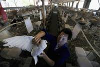 More infected in fresh wave of China bird flu - WHO