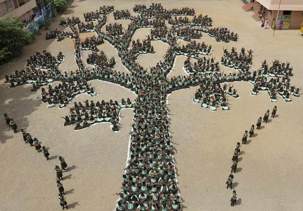 Students make a formation of a tree during a programme to create awareness to save trees and forests, in the southern Indian city of Chennai, June 28, 2011. REUTERS/Babu