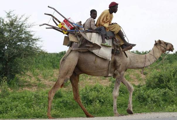 A man, his son and their farming tools sit on a camel on the Sokoto-Anka road, in Nigeria's northeastern state of Zamfara. Photo August 14, 2013, REUTERS/Akintunde Akinleye