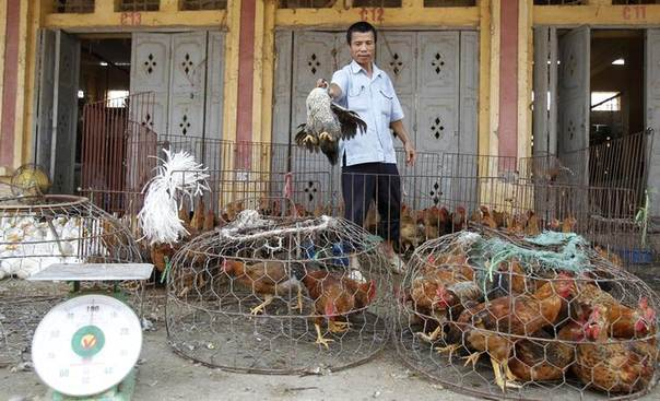 A man throws a hen into a cage at a wholesale poultry market in Ha Vy village, outside Hanoi, Vietnam, April 5, 2013. REUTERS/Kham