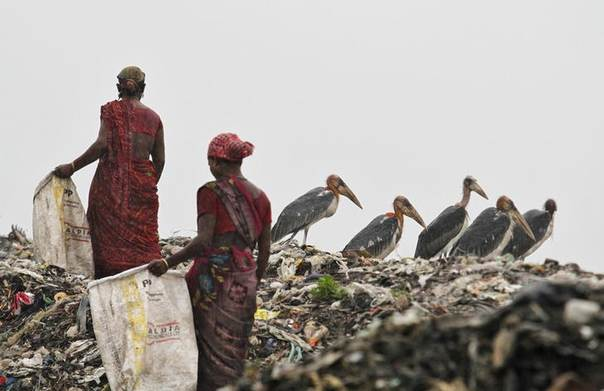 Scavengers, surrounded by a flock of Greater Adjutant birds, collect plastic for recycling at a dump site on World Environment Day in the northeastern Indian city of Guwahati, India, June 5, 2013. REUTERS/Utpal Baruah