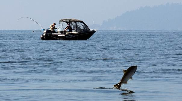 A salmon jumps out of the water while feeding as sports fishermen cruise by at the mouth of Capilano River in West Vancouver, British Columbia, Canada, on October 9, 2012. REUTERS/Andy Clark